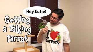 Getting a Parrot that Talks