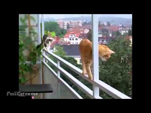 Ανόητες... γάτες!