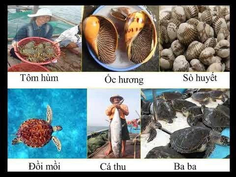 Khai thác khoáng sản và hải sản ở vùng biển Việt Nam. Địa lí 4 (GV: Lê Thành Mỹ)