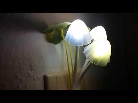 Kunju Lamp