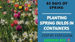 Basics of planting spring flowering bulbs in containers~ Is it too late to plant spring bulbs?