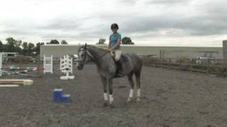 Horse Care & Buying Tips : How To Become A Horse Trainer