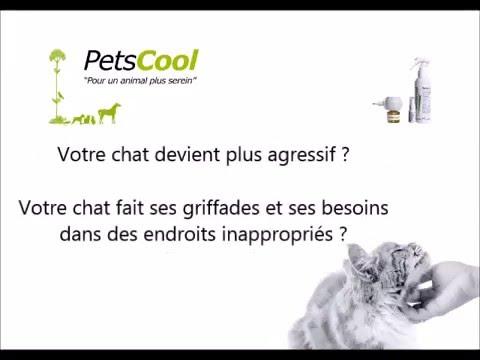 PetsCool, pour un animal plus serein