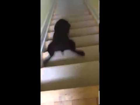 Hund rutscht Treppe runter