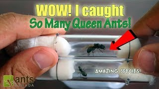 WOW! I CAUGHT SO MANY QUEEN ANTS!