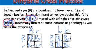 Dihybrid Practice #3