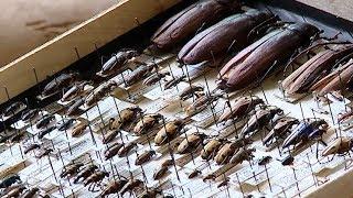 Почему нельзя ловить насекомых для коллекций
