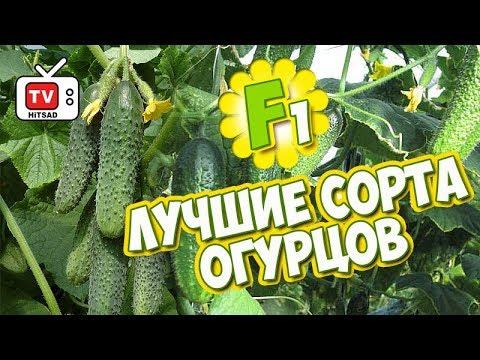 , title : 'F1 Семена огурцов 🌱 Огурец - лучшие сорта 🌱 Сад и огород с   Хитсад