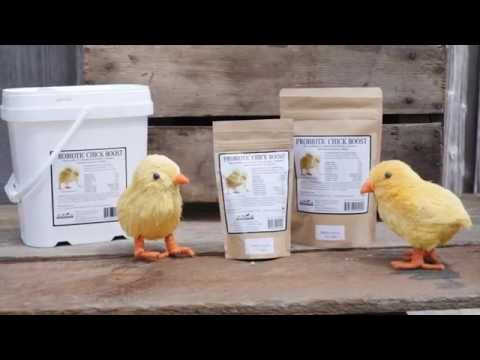 Chick Boost (8 oz) Video