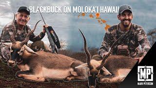 Blackbuck Antelope: Moloka'i Hawaii