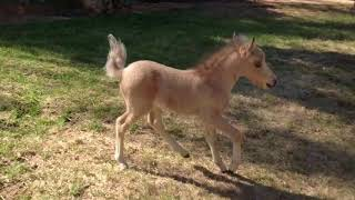 Our Crazy Baby Horse