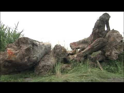 莫拉克風災漂流木處理及崩塌地復育紀錄片