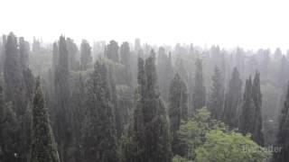 Сильный дождь в лесу, чтобы расслабиться и сна звучит интенсивные капли воды без грома