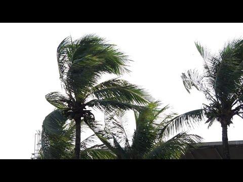Fortes ventos derrubam árvores em Búzios e píer é interditado na cidade