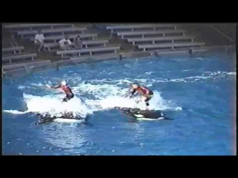 Shamu Rocks America at Sea World in 1999