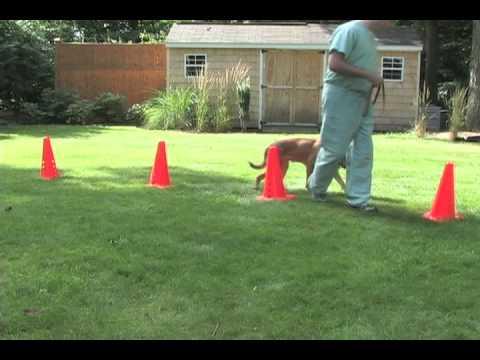 Weave Poles - Video