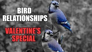 Bird Relationships - VALENTINE'S SPECIAL