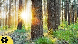 Studying Music, Relaxing Music for Stress Relief, Work Music, Studying, Meditation Music, ✿3223C