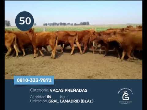 Lote Vacas CGP - Gral Lamadrid