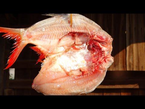เวิร์มส่งผ่านปลา