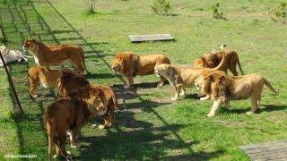 Сафари парк львов 2015 г.