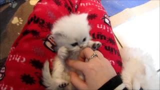 Felina's Smiley In Tickle My Belly