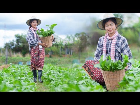 Cooking Choy Sum Recipe with Pork and​ Melon Dessert / Countryside Life