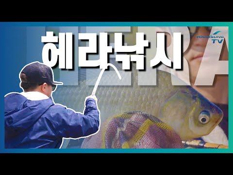 [헤라낚시] 두메낚시터에서 맞이한 떡붕어시즌 중층...
