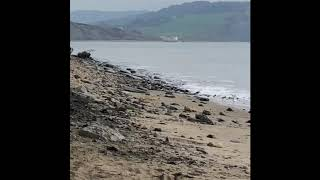 Jurassic Coast Ammonites,Lyme Regis,Dorset