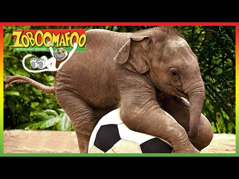 ZOBOOMAFOO - CUTE ANIMALS | Full Episode | Animal Shows For Kids | TV Shows  For Children - Zoboomafoo - WildBrain