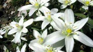 My Choice - André Rieu: Edelweiss (Sound of Music)