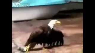 Орел плывет