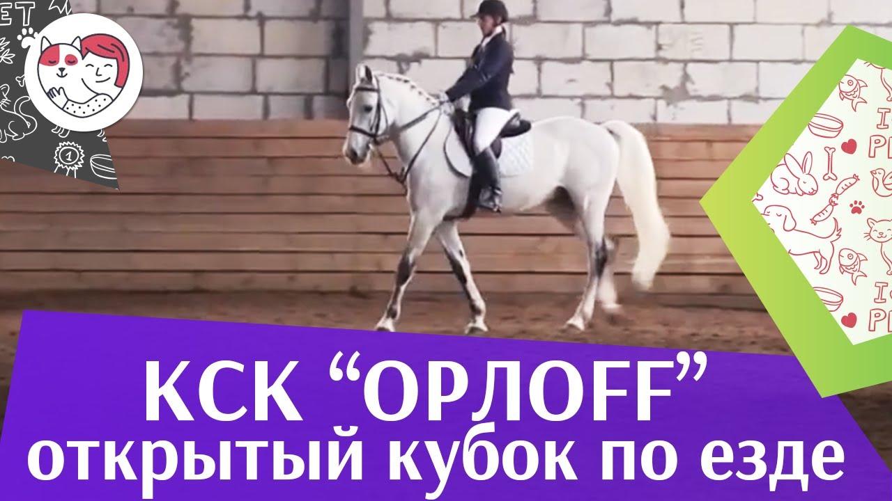 Открытый кубок КСК Орлоff   Выездка   2 на  ilikepet