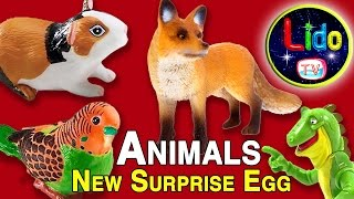 Surprise Egg Animals ☘ Learning Animals For Children Kids And Babies ☘ Lido TV Egg Surprise Toys