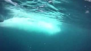 Marlin and Yellowfin Tunas