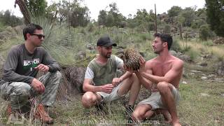 Andrew Ucles - Catching a Feral Cat (Barehanded) with Andrew