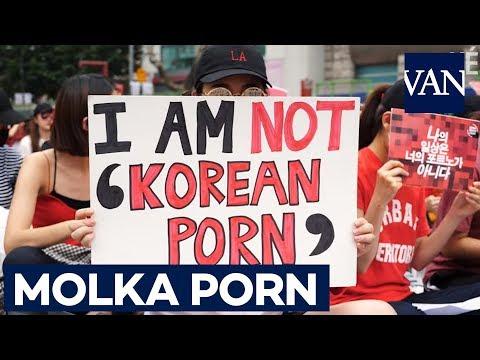 Sexo con delfines pornografía