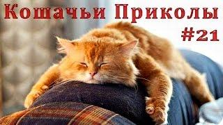 Смешные Кошки 2016! (#21) Веселая Видео Подборка! Смешные Животные 2016/