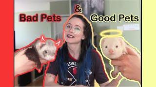 10 Reasons Ferrets Make Good & Bad Pets