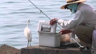 釣り人とシラサギ | Kholo.pk