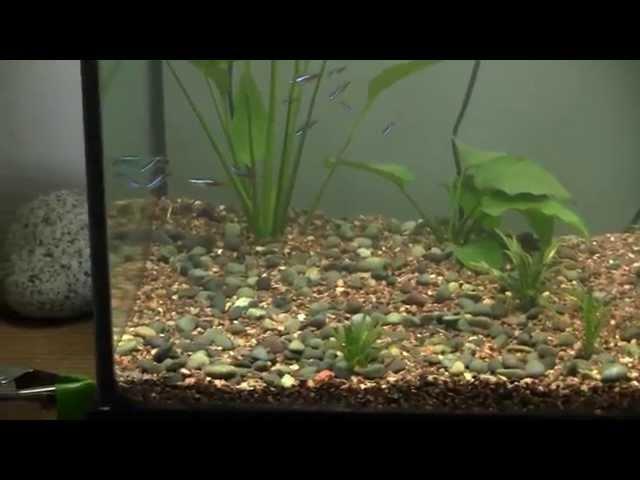 Jacob's Planted Discus Aquarium