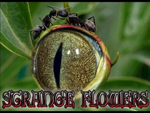 Top Most Beautiful But Strange Flowers | Unique Flowers | Odd Flowers
