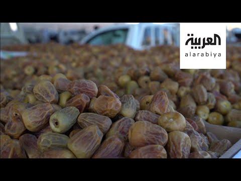 العرب اليوم - شاهد: تمور السعودية تجوب العالم في موسمها