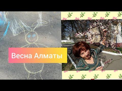 Vlog Я рисую на асфальте изучаем цвета В алматы цветет урюк и вишня Весна пришла в Алматы