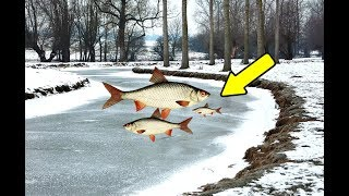 Секреты ловля плотвы в глухозимье на реке