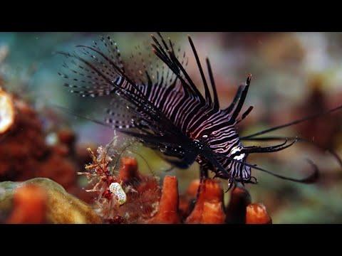 Коралловый риф — как растёт и образуется, из чего состоит? | Фото, видео