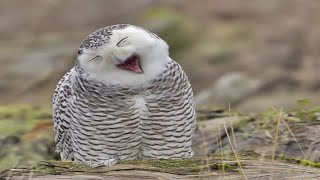 Funny Owls And Cute Owl  Sweet Owls in Videos Compilation