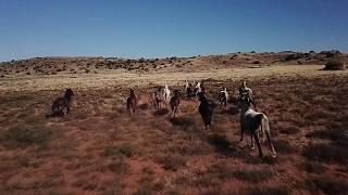 Karoo Ranching EAstern Cape SA