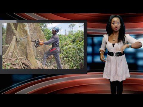 How Deforestation Is Destroying Nigeria, Africa
