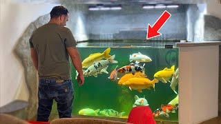 The Most Amazing Indoor Koi Pond With Fish *DIY (Long Version)